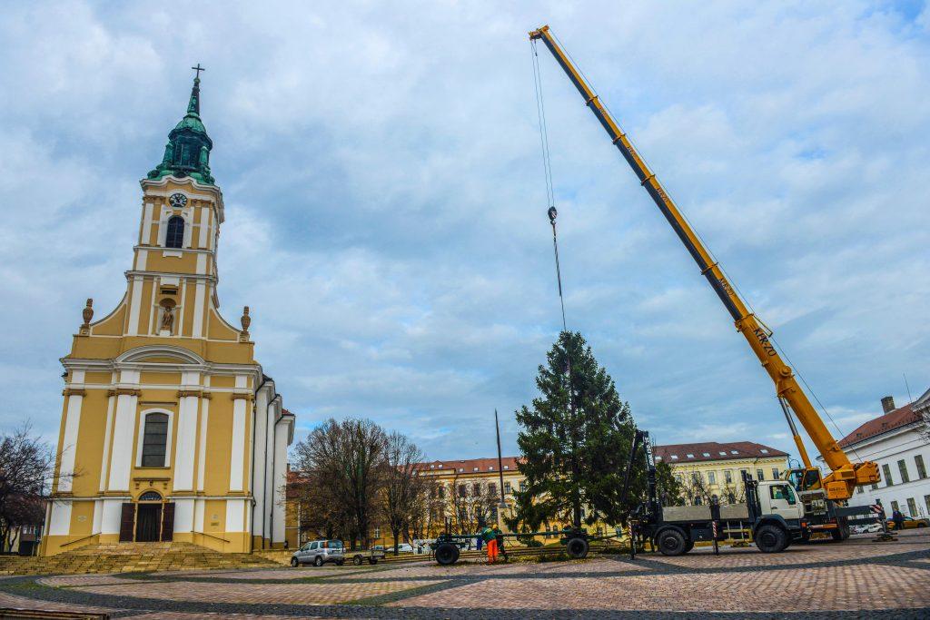 A Béla király téren felállították a város karácsonyfáját
