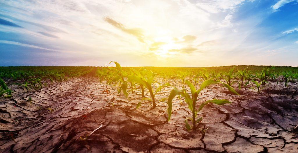 Alkalmazkodnia kell a klímaváltozáshoz megyénk gazdáinak is