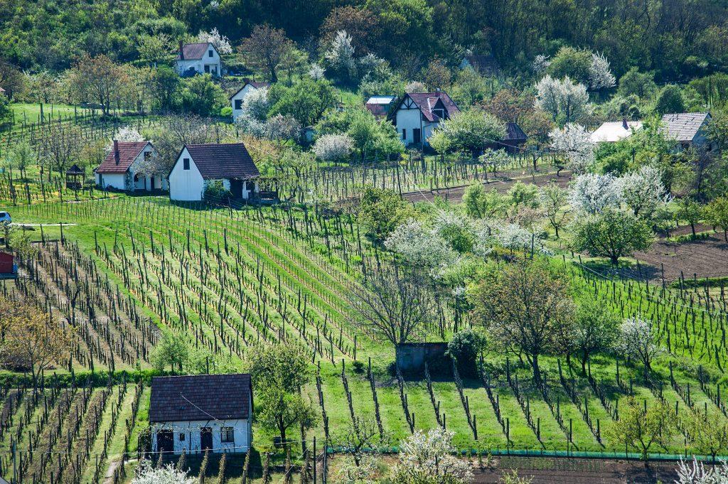 Szekszárdi pincészetek is versenyben vannak a Magyarország Legszebb Szőlőbirtoka címért